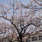 五日市にも春がきた!