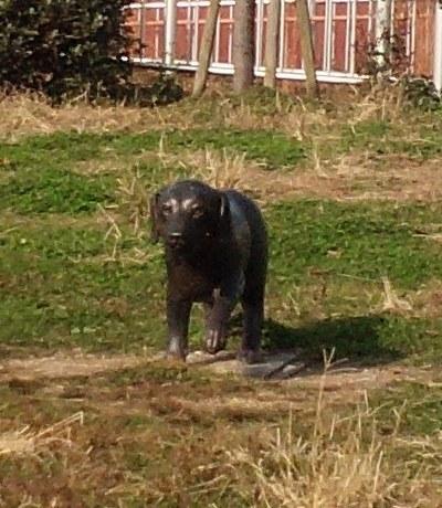トリミング後の犬の像