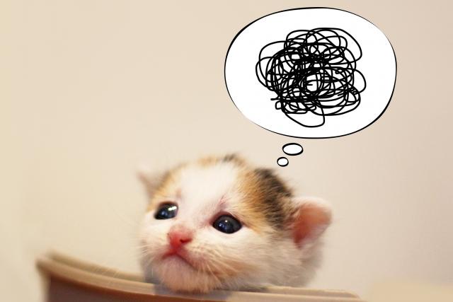 困ったネコ