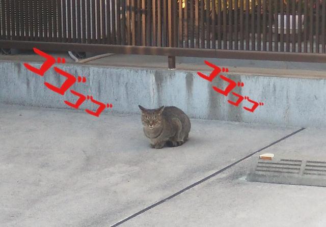 ネコ スマホ 撮影