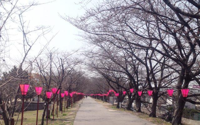 桜のきもち03