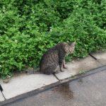 『吾輩も猫である』は、この猫は何を考えてるの?が楽しくなる【書評・感想】